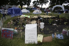 A community garden is seen among tents in Cal Anderson Park in an area being called the Capitol Hill Autonomous Zone (CHAZ). (Photo credit: JASON REDMOND/AFP via Getty Images)