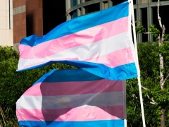 Pink and blue trans pride flags flutter in the breeze in Los Angeles. (Photo by ROBYN BECK/AFP via Getty Images)