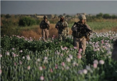 U.S. forces walk through an opium field in Helmand Province in 2011. (Bay Ismoyo/AFP via Getty Images)